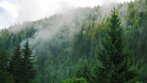 Уряд планує вкрити лісами 20% території України